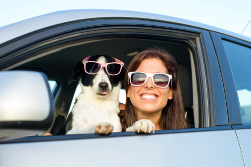 pets distracted driving